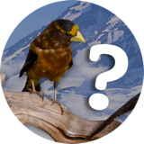 Icon of a bird next to a question mark